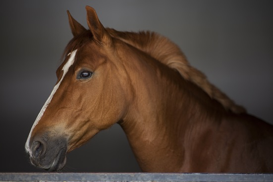 Milagro understands how much you love and care for your Horse.